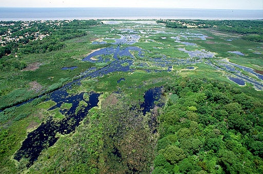 Photo of marshy area in foreground, ocean in backgroun
