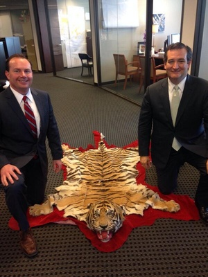 A deleted image from the @SenTedCruz Twitter account of Sen. Ted Cruz and Sen. Mike Lee kneel next to a tiger skin rug in an office.